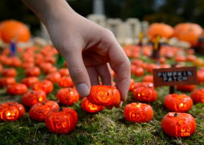 World's smallest pumpkin patch featuring miniature carvings pops up in Miniland at the LEGOLAND Windsor Resort.