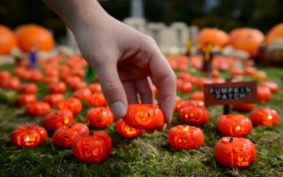 World's Smallest Pumpkin Patch